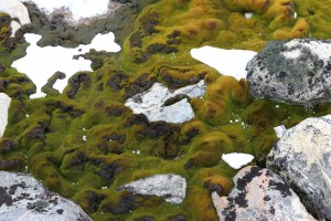 Velvety moss, snow, and rock