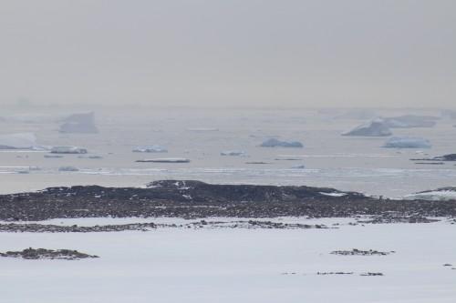 Icebergs en route to Wilkes