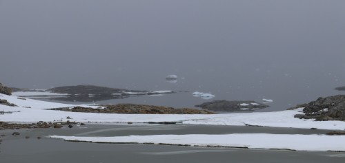 Icebergs in the mist